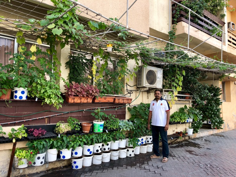 Sam George Abraham and his edible garden
